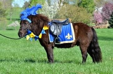 Renaissance Set Pony