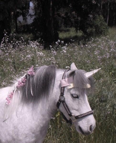 Unicorn Browband™