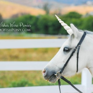 Ivory and Gold Unicorn Horn