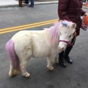 © Seven Oaks Farm Miniature Therapy Horses