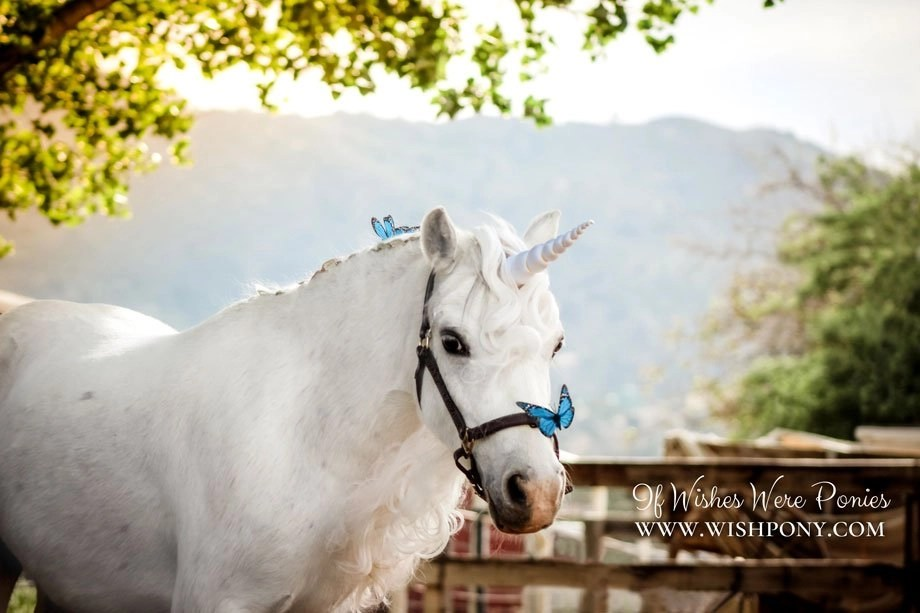 Realistic Natural-Look Unicorn Horn for Miniature Horse ...