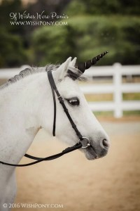 Black Unicorn Horn for Horse