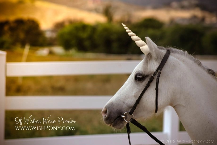 Unicorn Horn for Horse