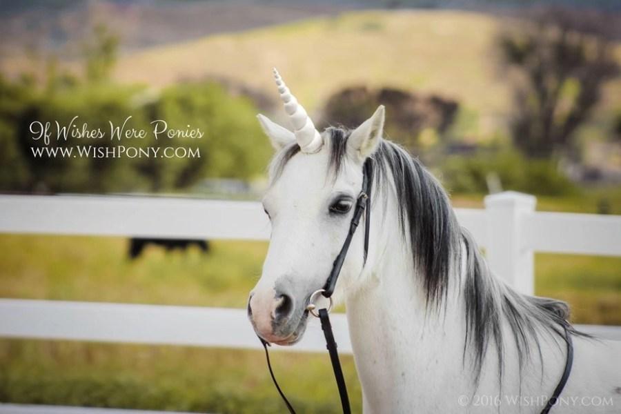 White Unicorn Horn for Horse