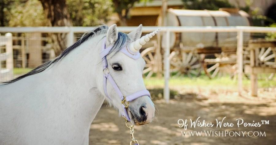 Unicorn Horn Browband