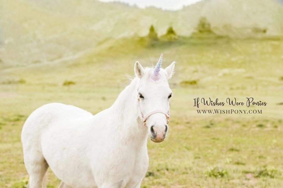 Wishpony.com Custom Unicorn Horns and Halters