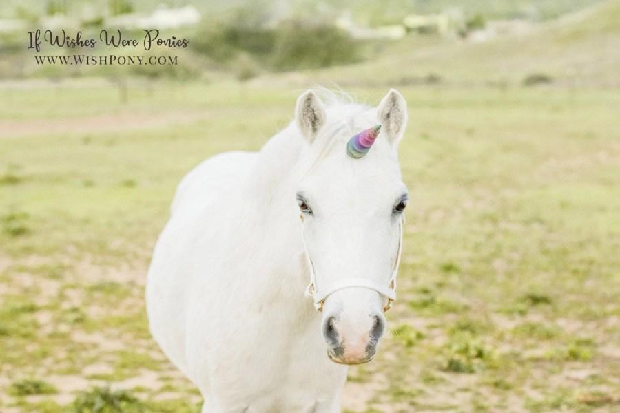 Custom Rainbow Unicorn Horn for horses and ponies