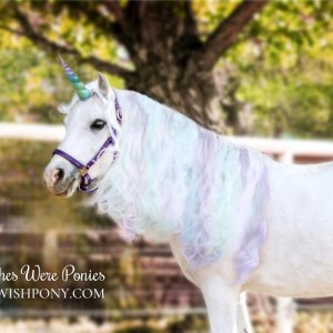Rainbow Unicorn Horn for Horses Ponies
