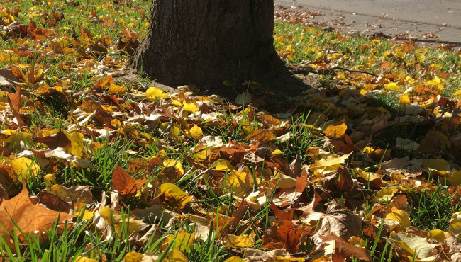 Fall leaves on ground generic_303932