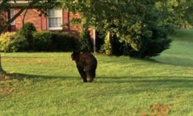 Corydon bear_459465