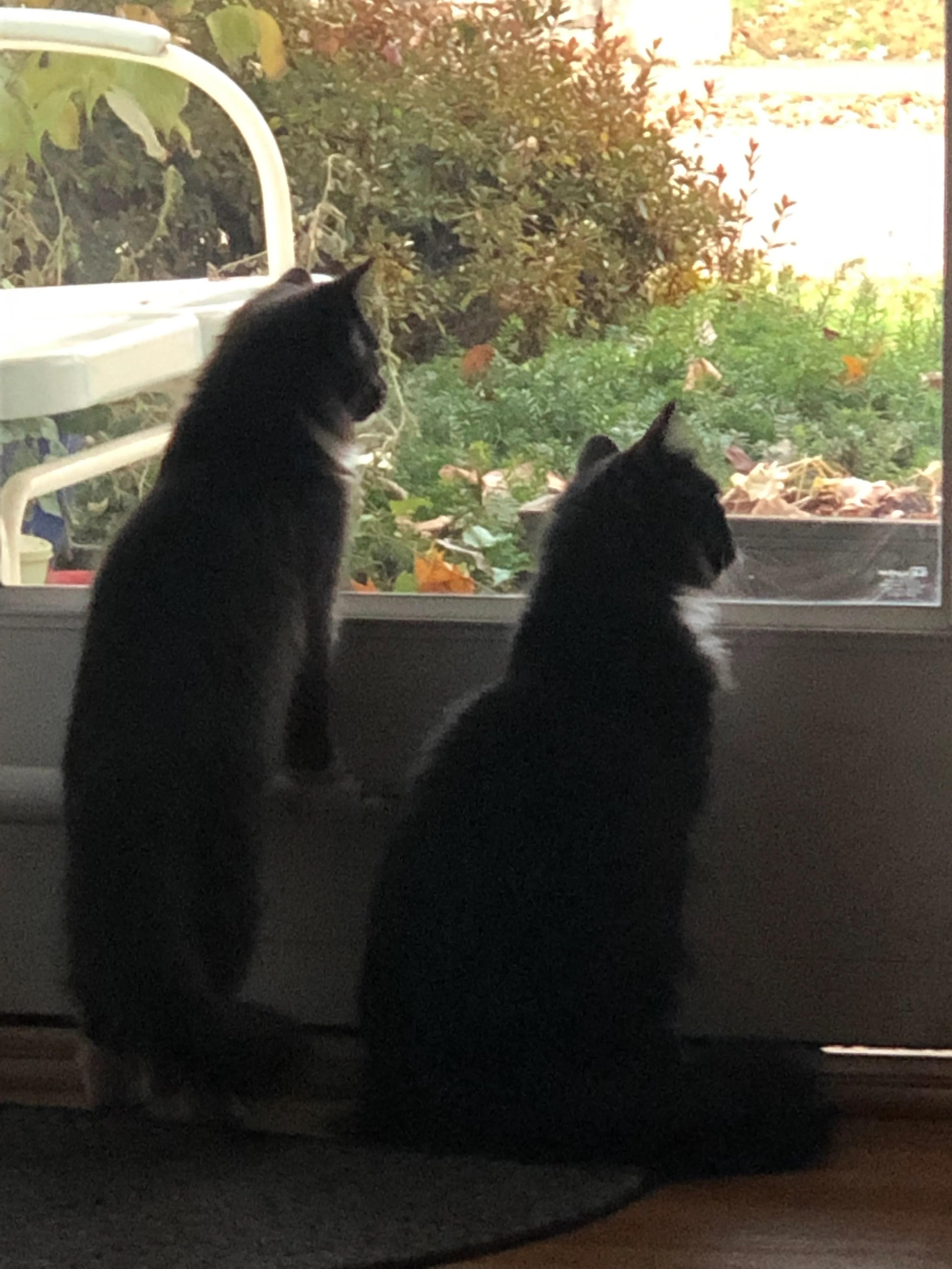 Wilson and Binx window_1551811556068.jpg.jpg