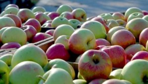 Fort Wayne Apple Trail offers variety of activities, food options