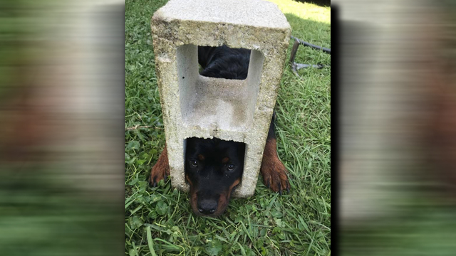 dog stuck_in cinder block_1556101442673.jpg.jpg