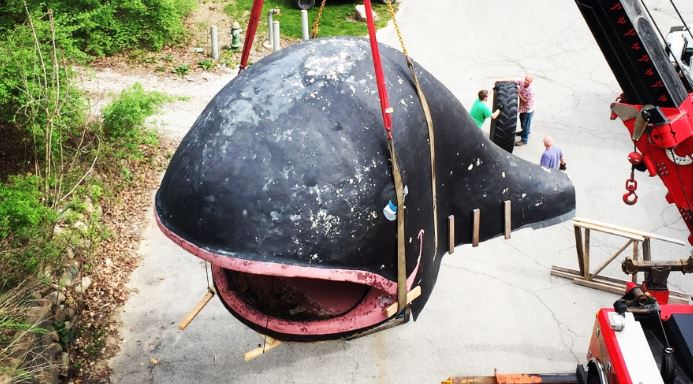 Willie the Whale_410833