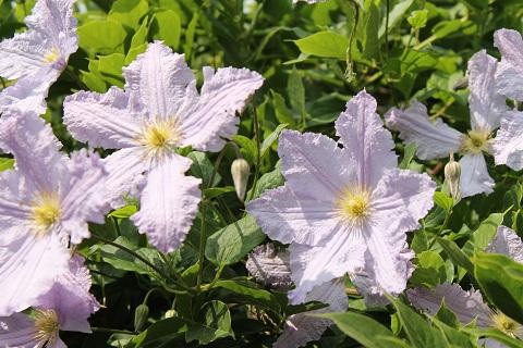 bloem7