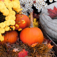 Why We Chose Not to Celebrate Halloween