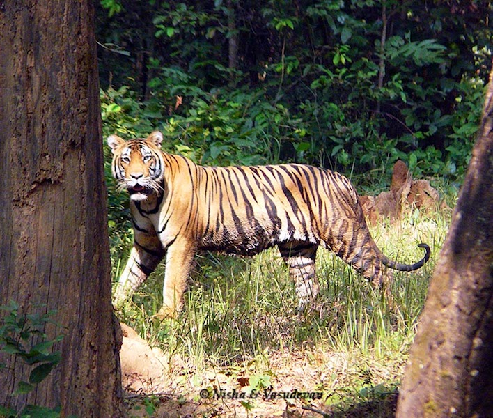 Traveling in India - Wildlife Tours