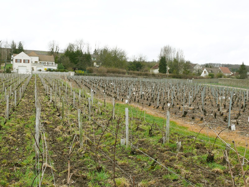 Champagne wine tours and wine tasting