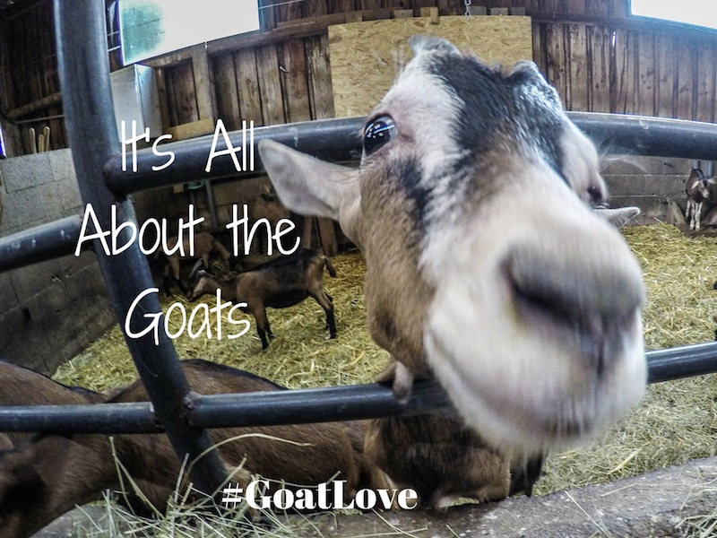 Episode S02E04: It's All About the Goats