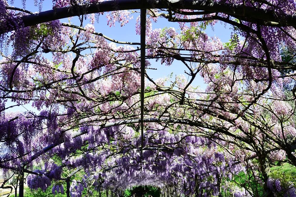 Gardens of Florence #3: giardino Bardini, splendour in the grass