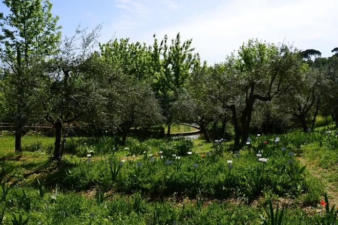 Giardino dell'Iris - Piazzale Michelangelo - Florence