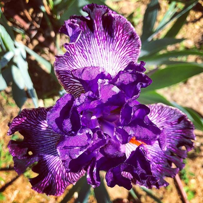 Gardens of Florence #6: giardino dell'Iris