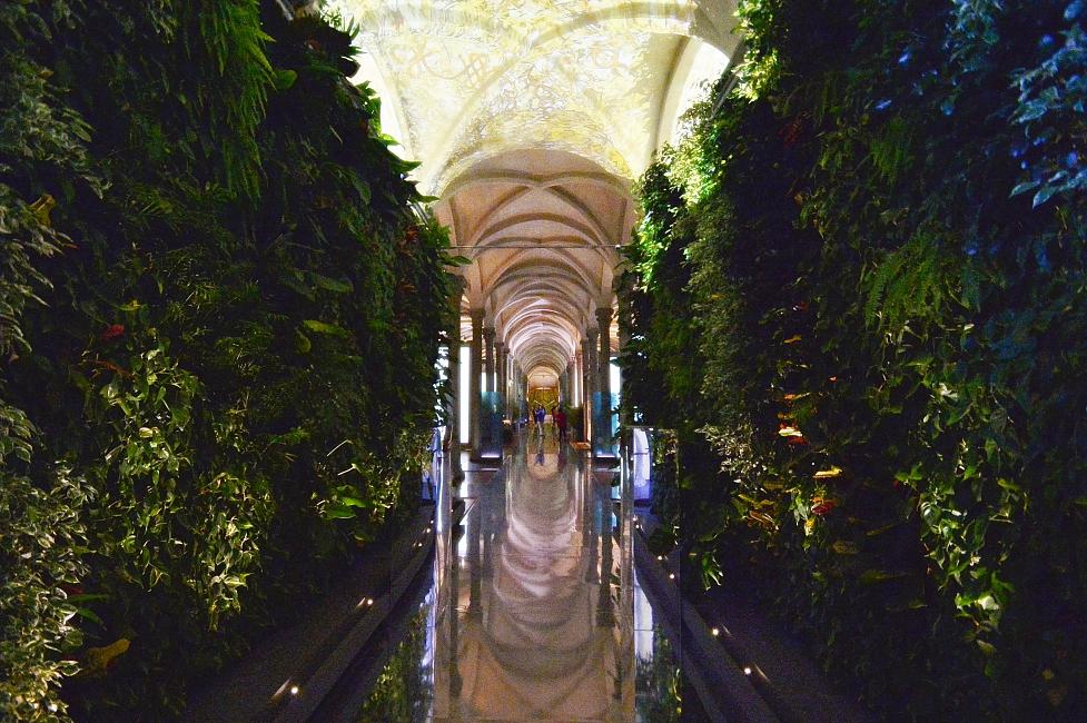 'The Botany of Leonardo,' exhibition at Santa Maria Novella Museum