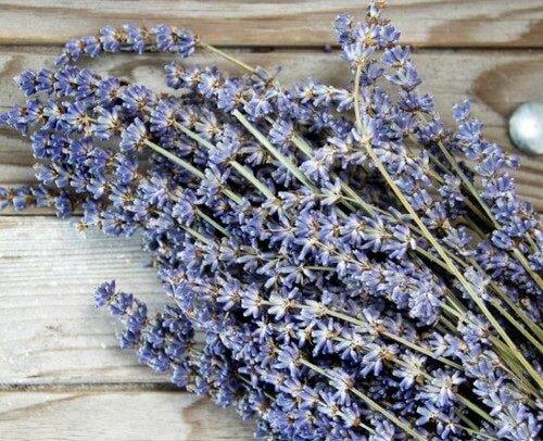 lavender flower image