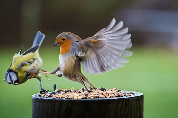 """""""THIS IS SPARTA!"""""""