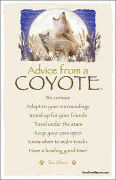 Advice from a Coyote