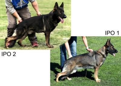 Knox vom Eisernen Kreuz & Tazzy vom Haus Tyson