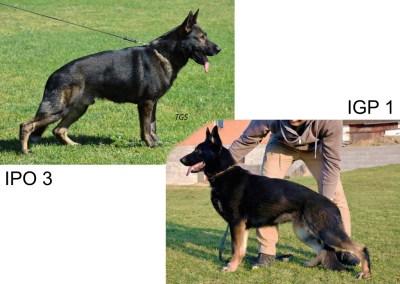 Ace vom Haus Tyson & Xiba vom Haus Tyson