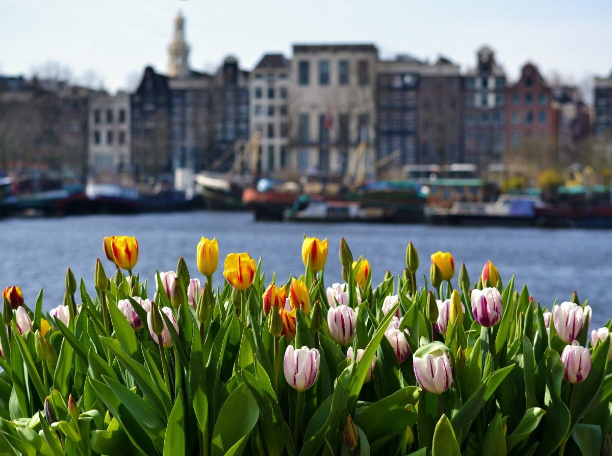 When and Where to see Tulips in the Netherlands