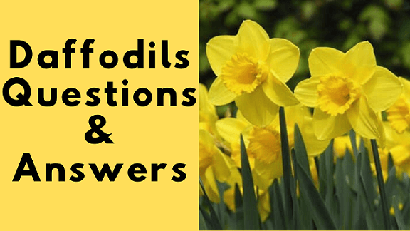 Daffodils Questions & Answers
