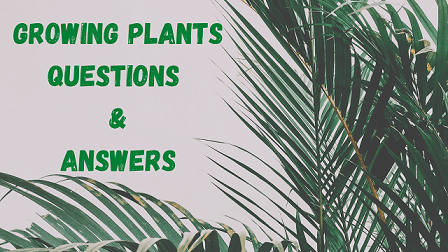 Growing Plants Questions & Answers