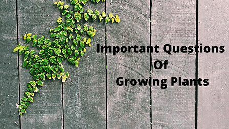 Important Questions Of Growing Plants