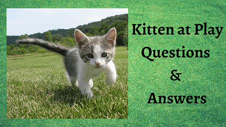 Kitten at Play Questions & Answers