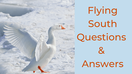 Flying South Questions & Answers