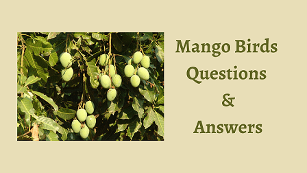 Mango Birds Questions & Answers