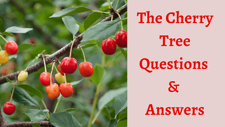 The Cherry Tree Questions & Answers