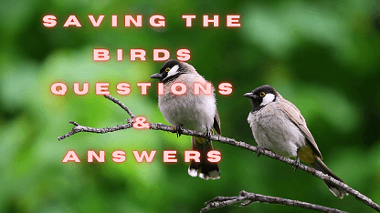 Saving the Birds Questions & Answers