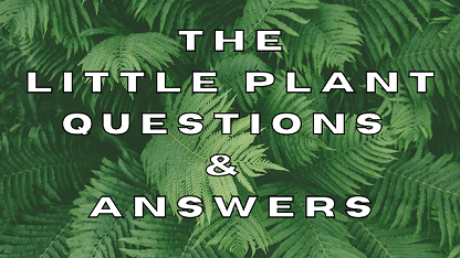 The Little Plant Questions & Answers