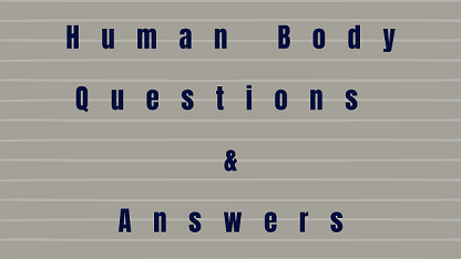 Human Body Questions & Answers