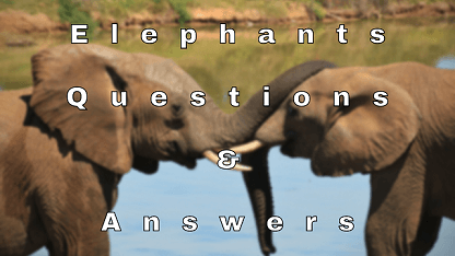 Elephants Questions & Answers