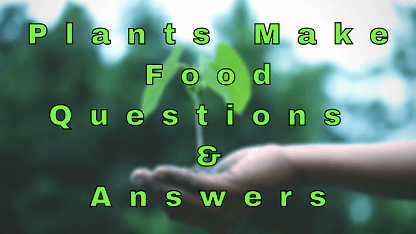 Plants Make Food Questions & Answers