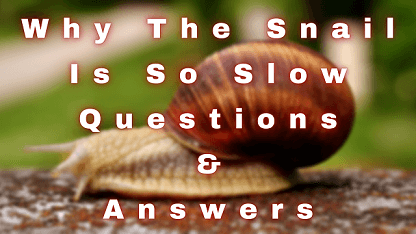 Why The Snail Is So Slow Questions & Answers