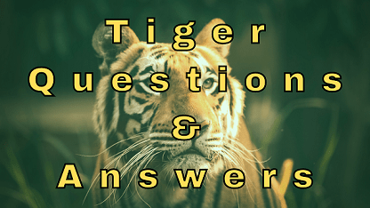 Tiger Questions & Answers