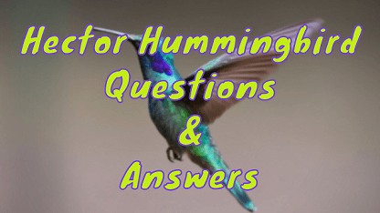 Hector Hummingbird Questions & Answers
