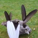 Witte Zwanenveren en Zwarte kalkoenveren