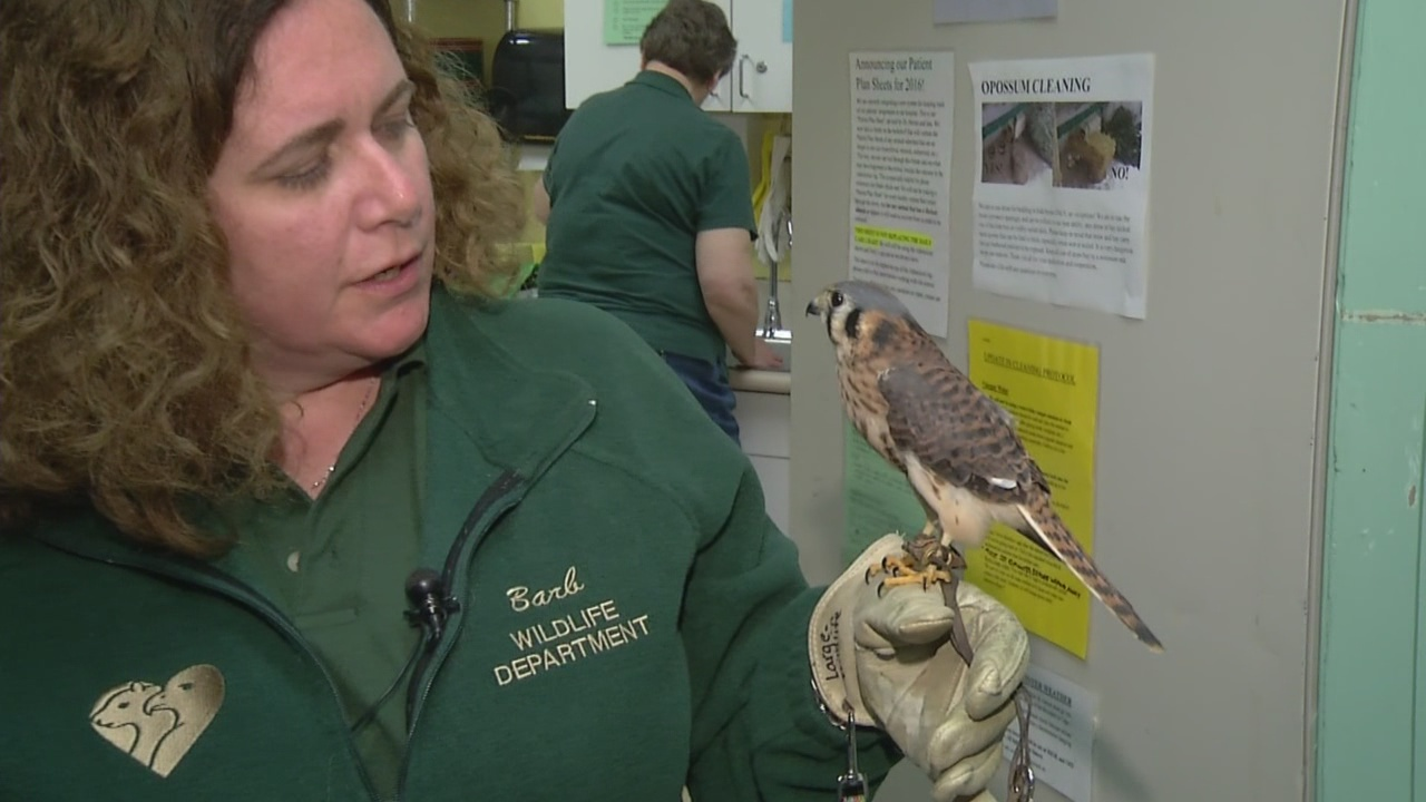 0208 SPCA wildlife_232080
